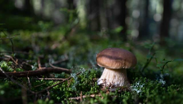 Wirtshaus Jagawirt - Schwammerl im Wald