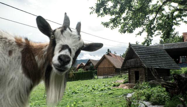 Wirtshaus Jagawirt - Tiere hautnah erleben